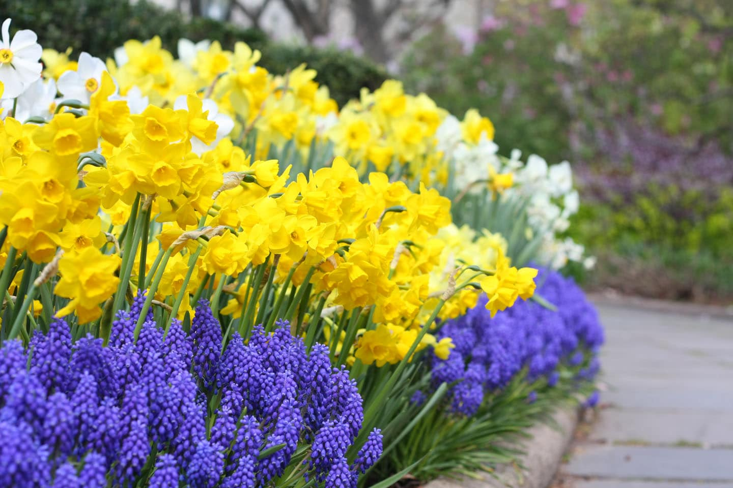 How to incorporate bulbs into your landscape northern nester for Scadenzario fiscale 2017