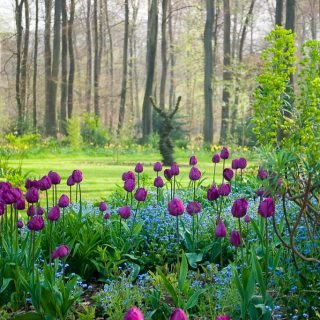 How To Incorporate Bulbs Into Your Landscape