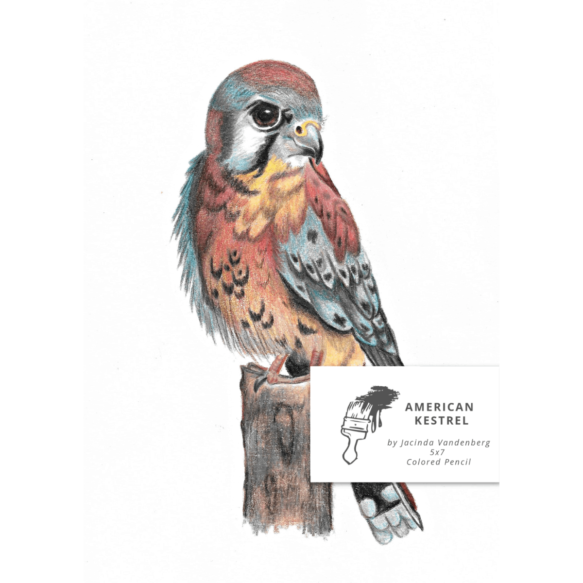 5x7 American Kestrel in Colored Pencil