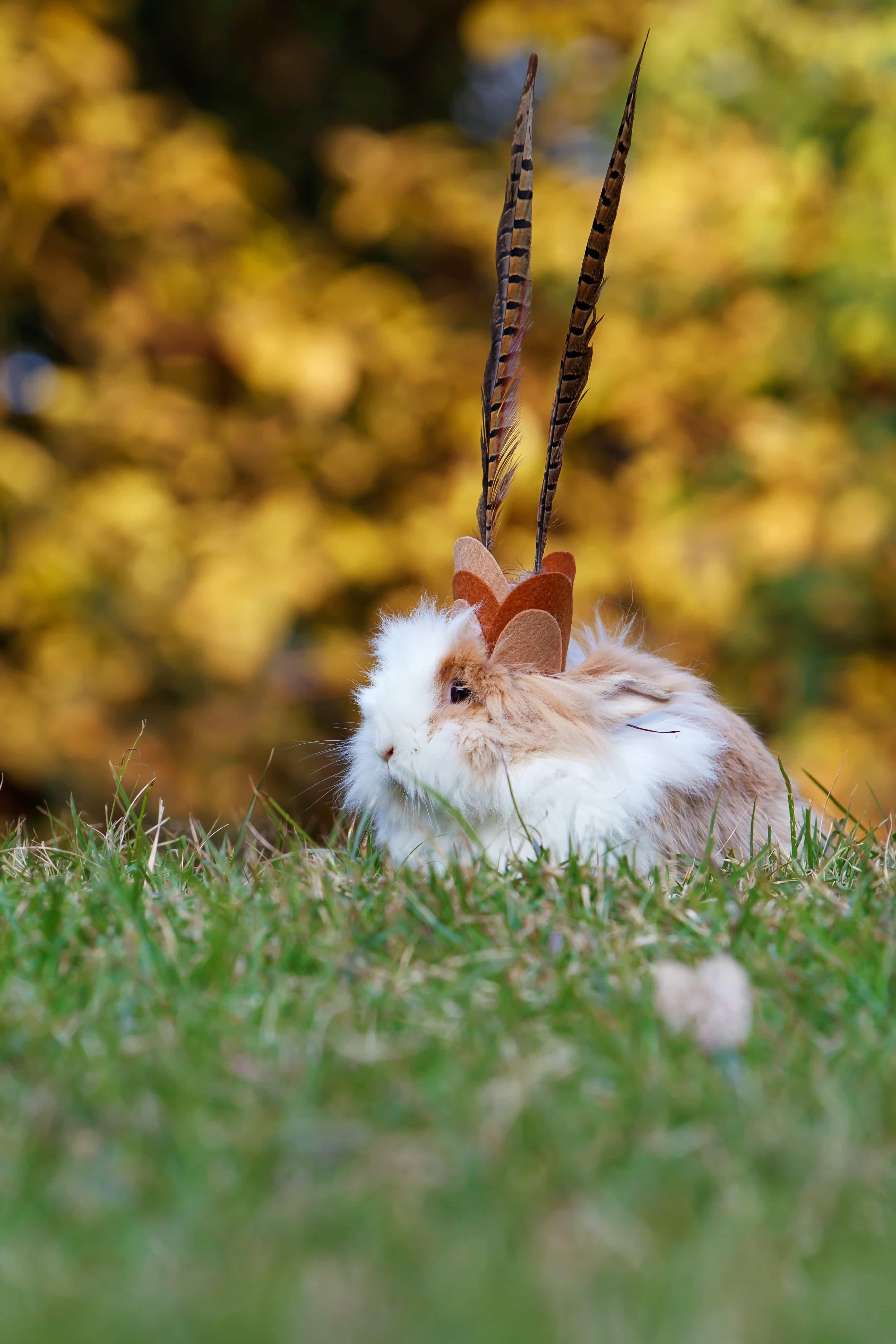 79 Do Rabbits Eat Carrots Photos and Premium High Res Pictures ...
