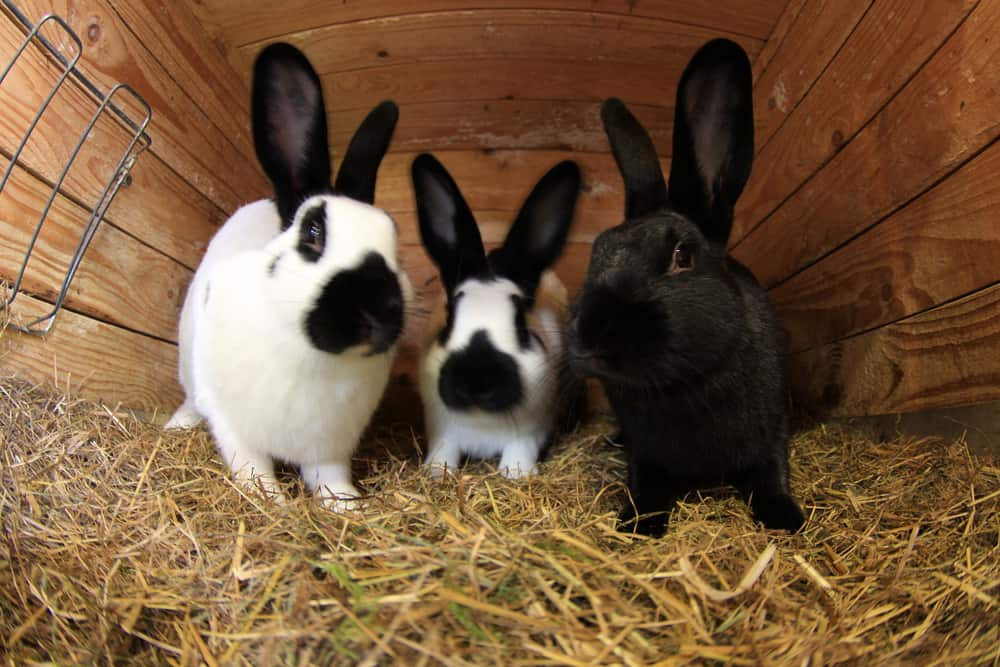 best bedding for baby rabbits