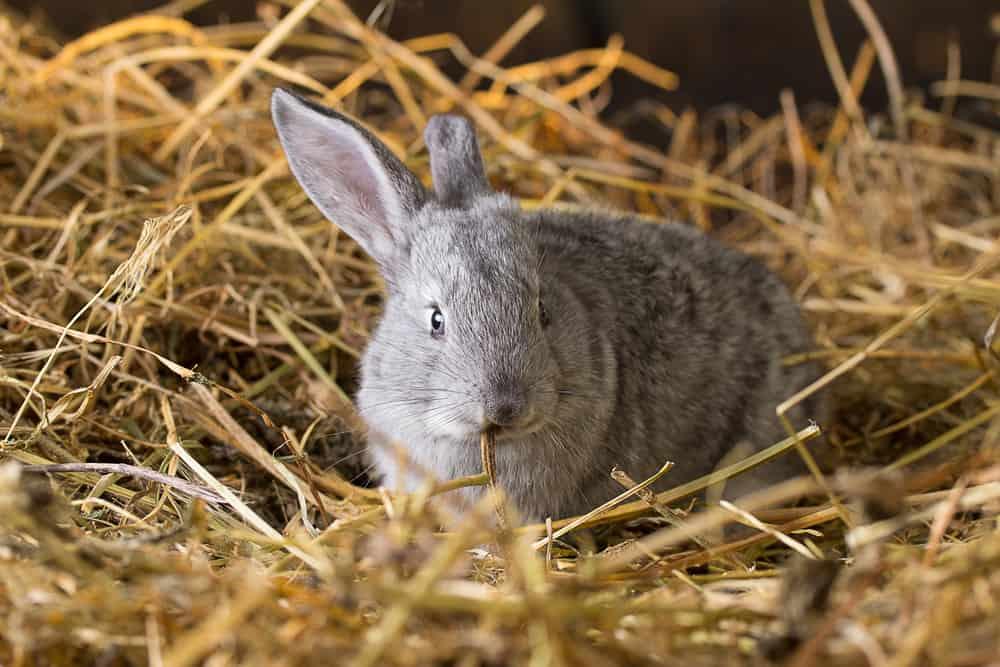 do rabbits really need bedding