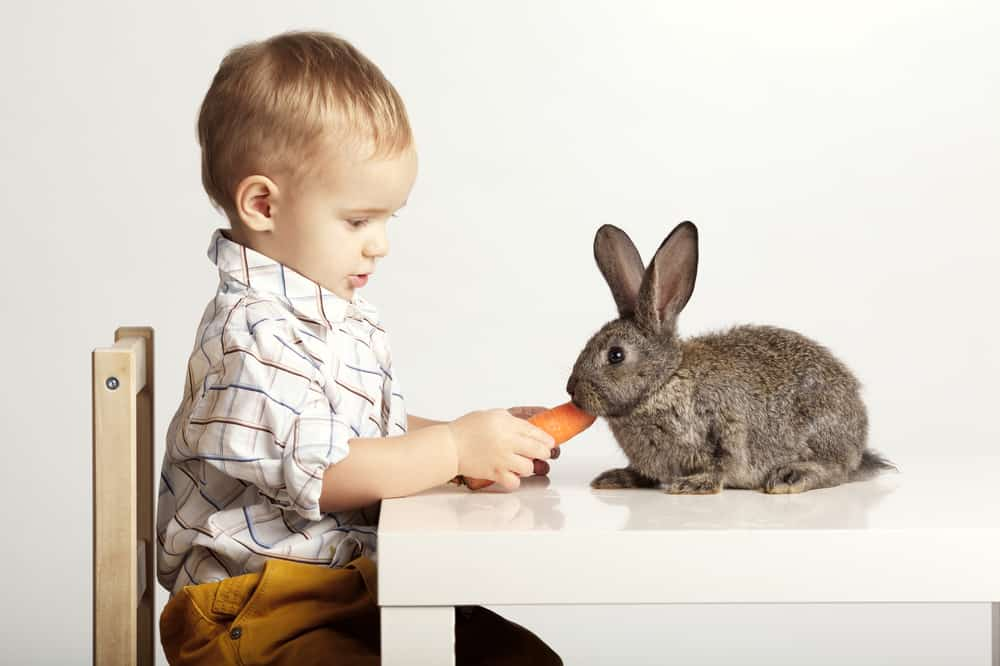 safe foods for rabbits