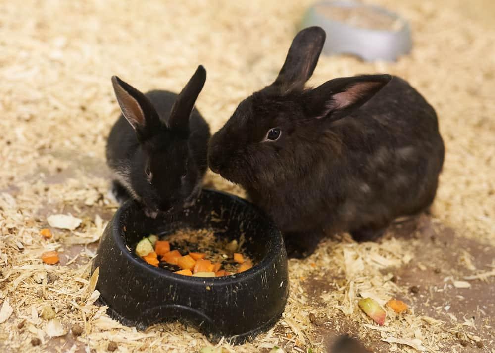 best rabbit feeder