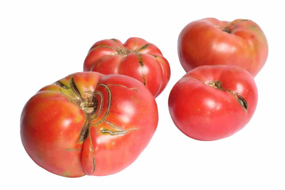 can you freeze tomatoes