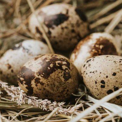 Quail Eggs Facts