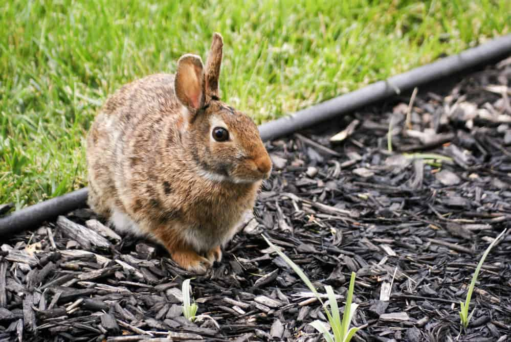 best rabbit beddings