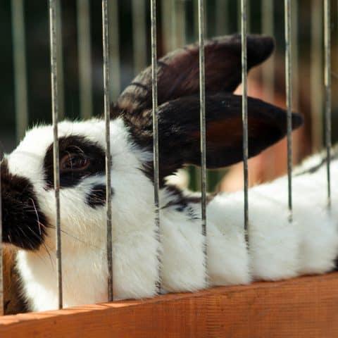 best rabbit indoor cage
