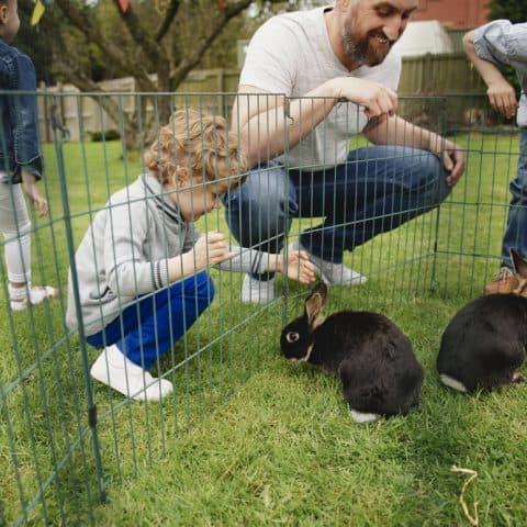 best rabbit playpen