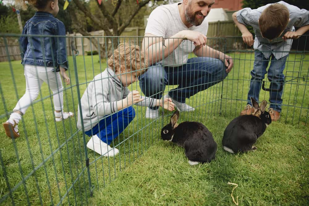 best rabbit playpen