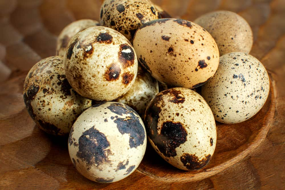 other Quail Eggs Facts