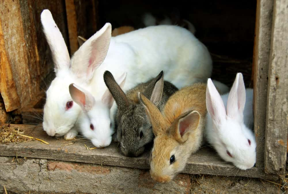 types of beddings for rabbits