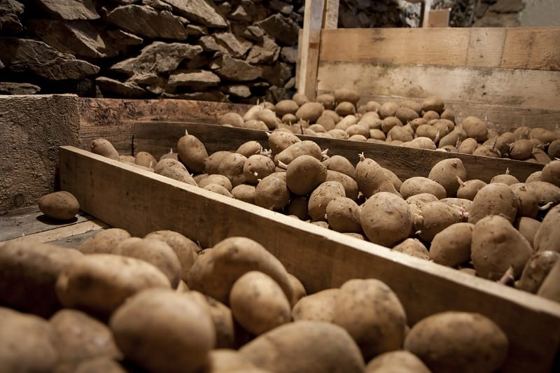 other ways to store potatoes