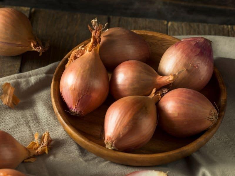 shallots vs onions