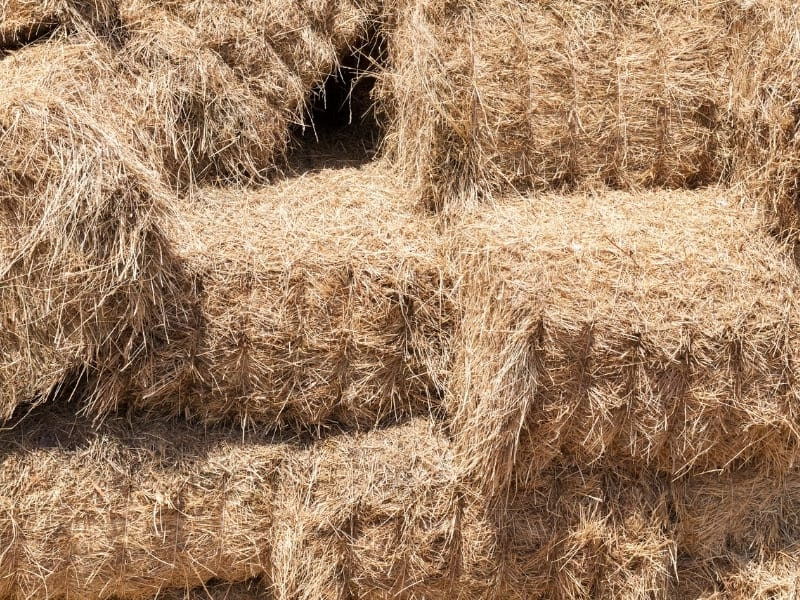 difference between hay vs straw
