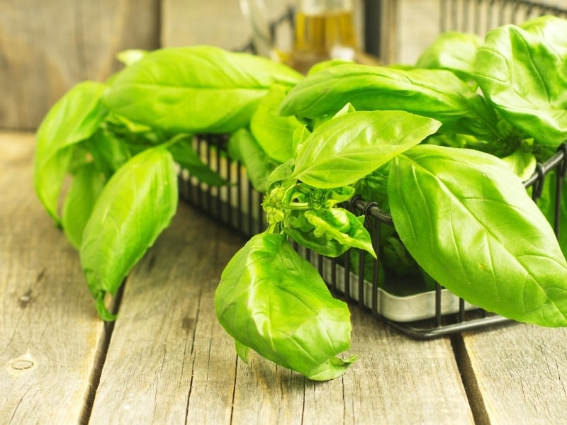 different ways to store basil