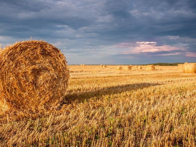 hay vs straw