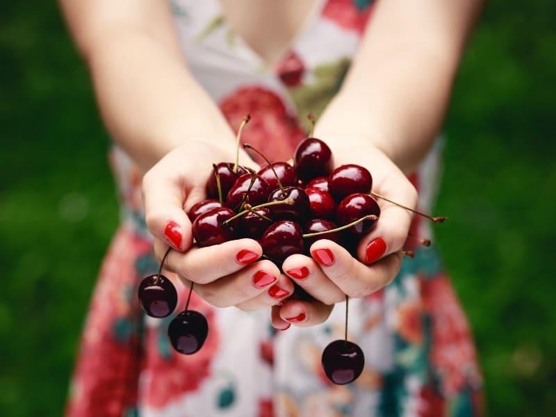 best cherries to eat