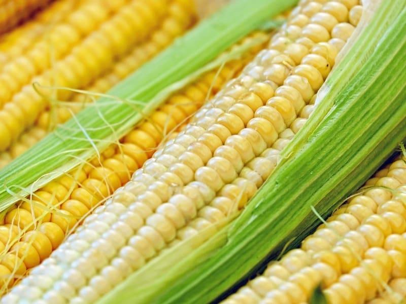 types of corn