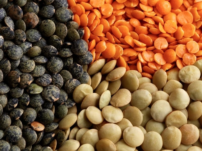 different variaties of lentils