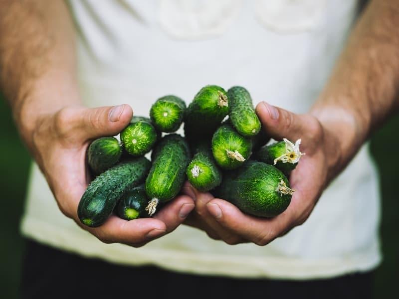 specialty cucumber