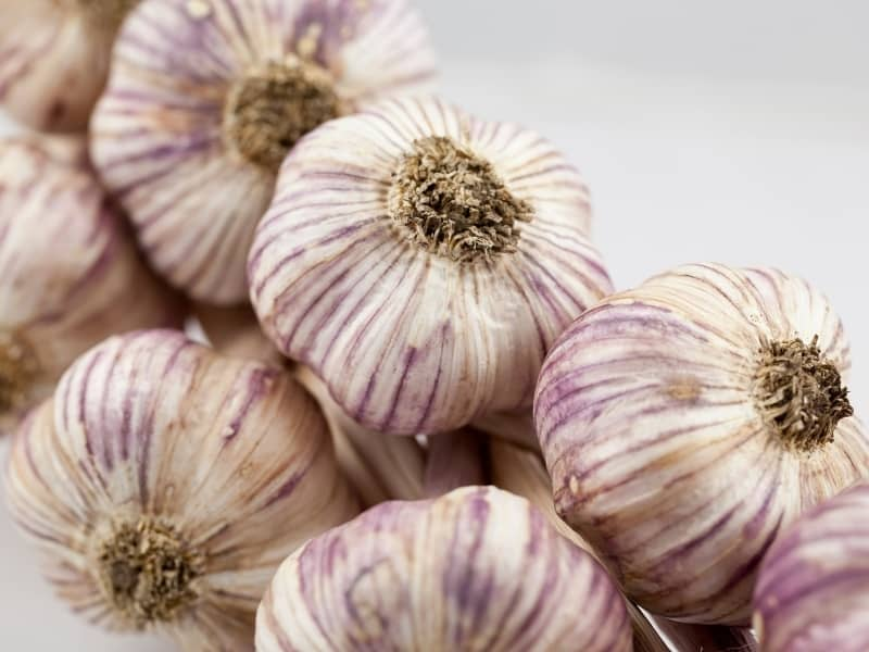 types of garlic
