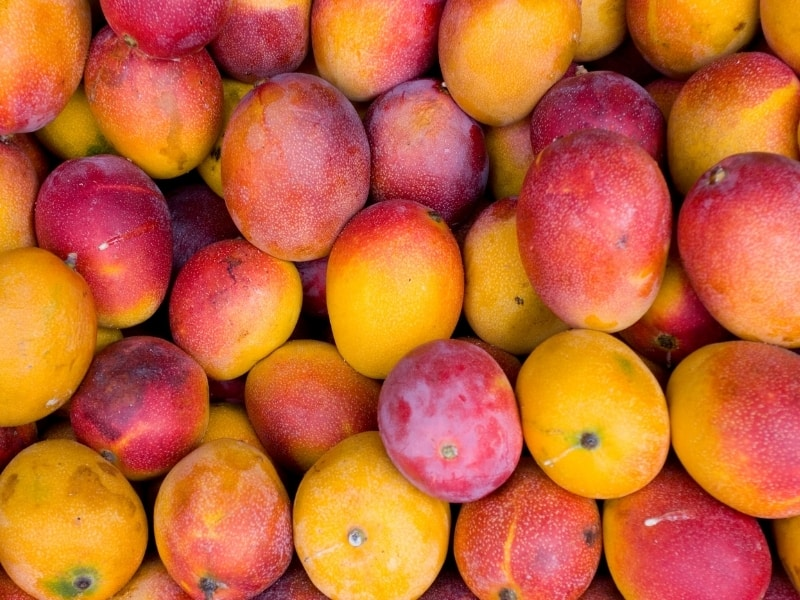 popular types of mangoes