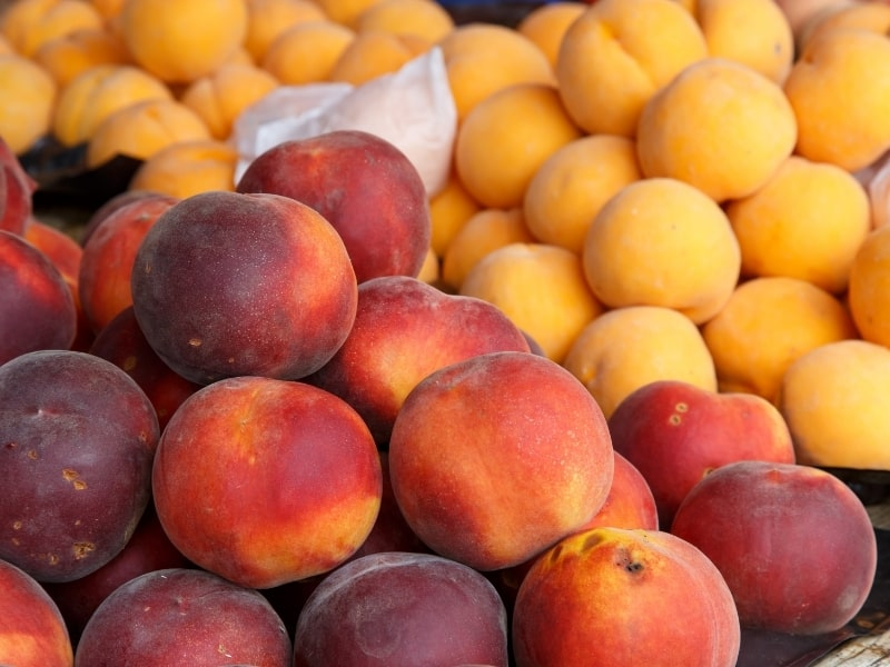 types of peaches