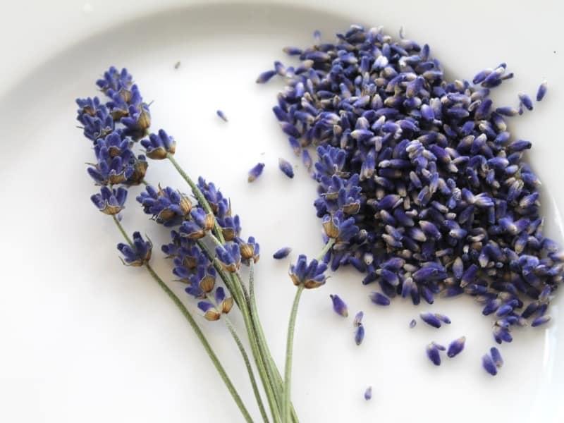 choosing lavender seeds
