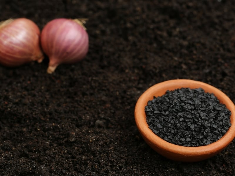 how to plant onion seeds
