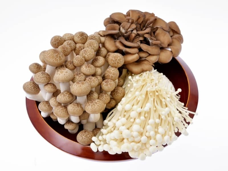 popular edible mushrooms