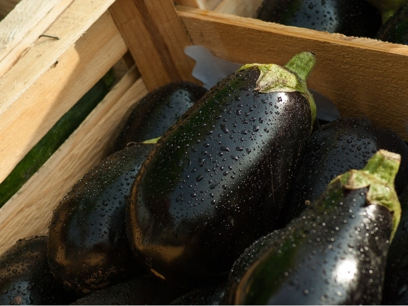 what is an eggplant