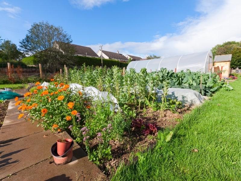 benefits of urban gardening