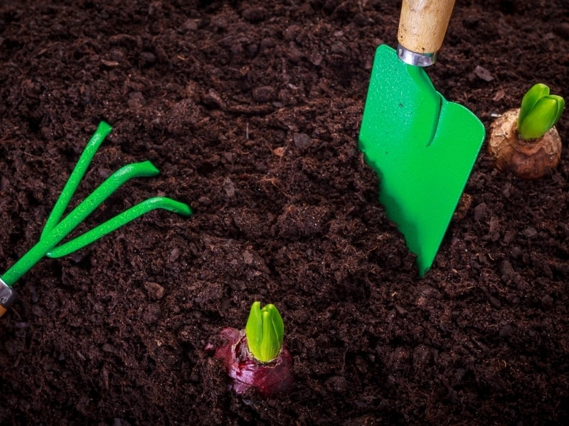 best soil for gardening