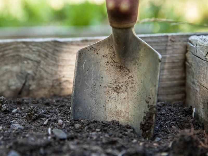 best soil for plant growth