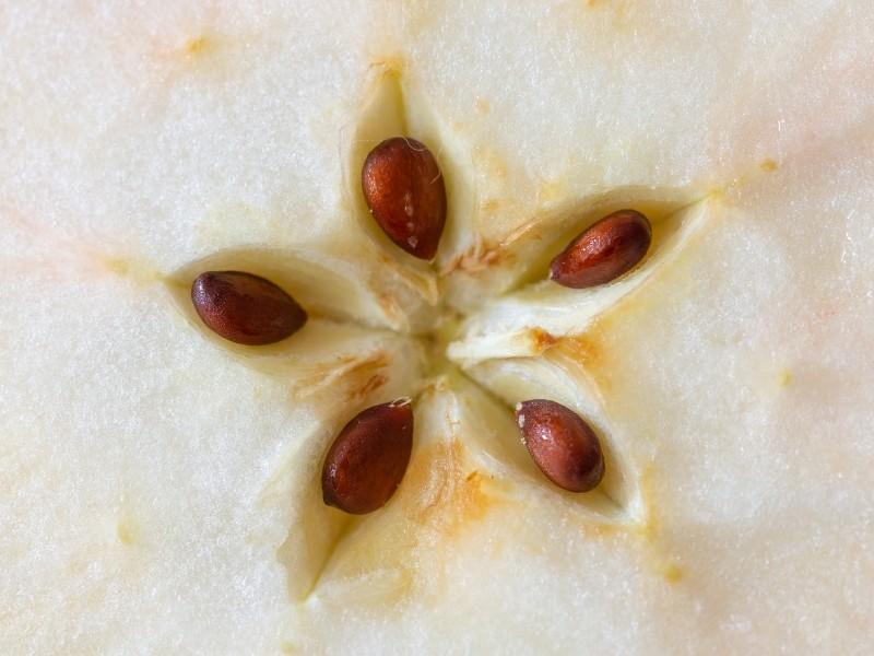 choosing apple seeds