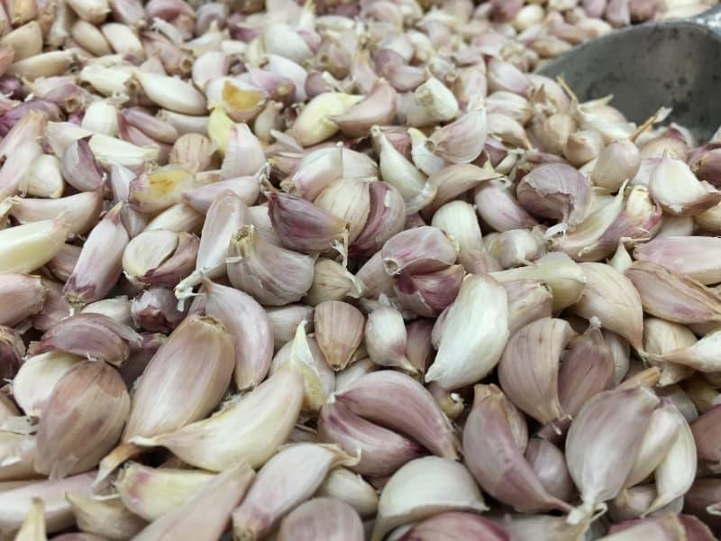 choosing garlic seeds