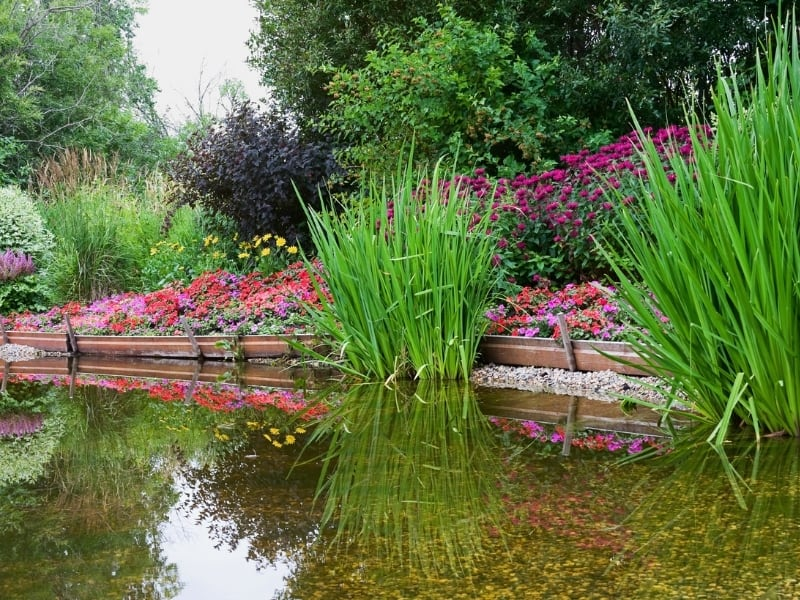 designing your water garden