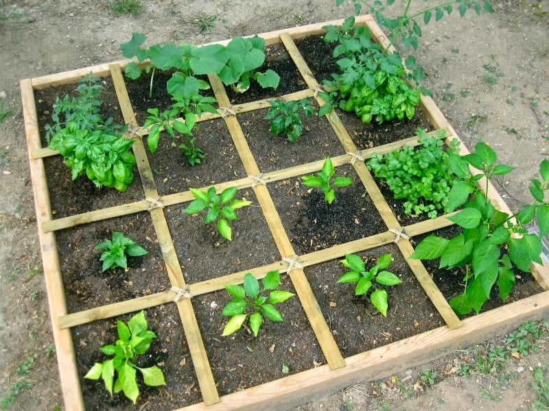 guidelines for square foot gardening
