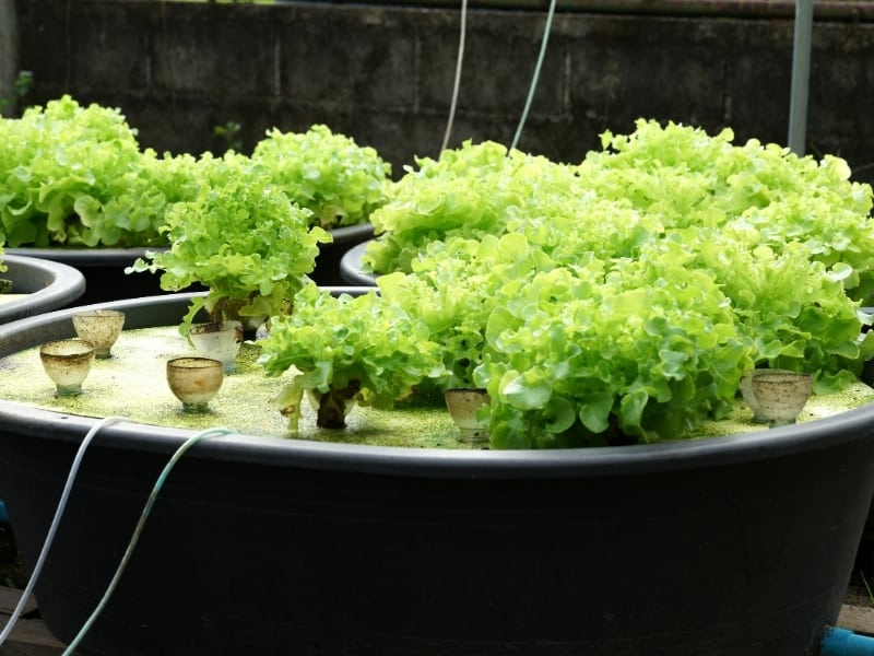 how does aquaponics help the environment