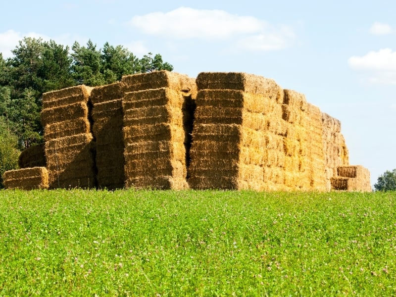 how to plant with bale
