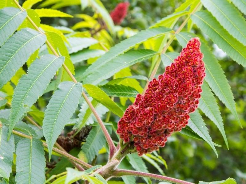 how to recognize poisonous plants