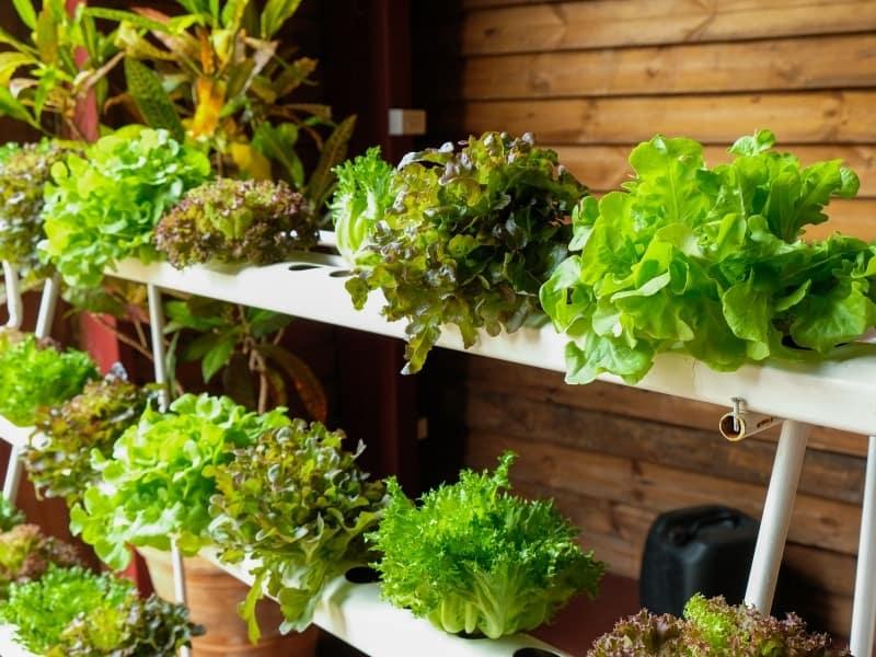 hydroponics method