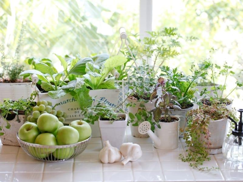 kitchen garden vs vegetable garden