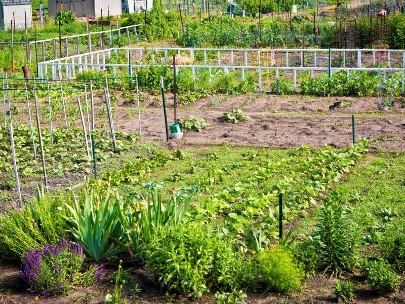 midwest gardening