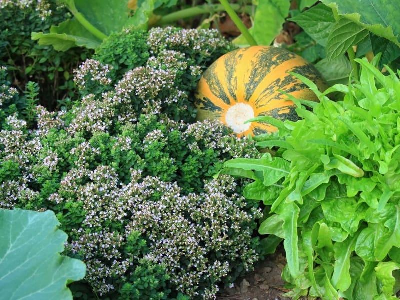 permaculture garden benefits