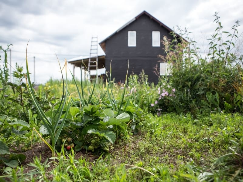 permacultured garden