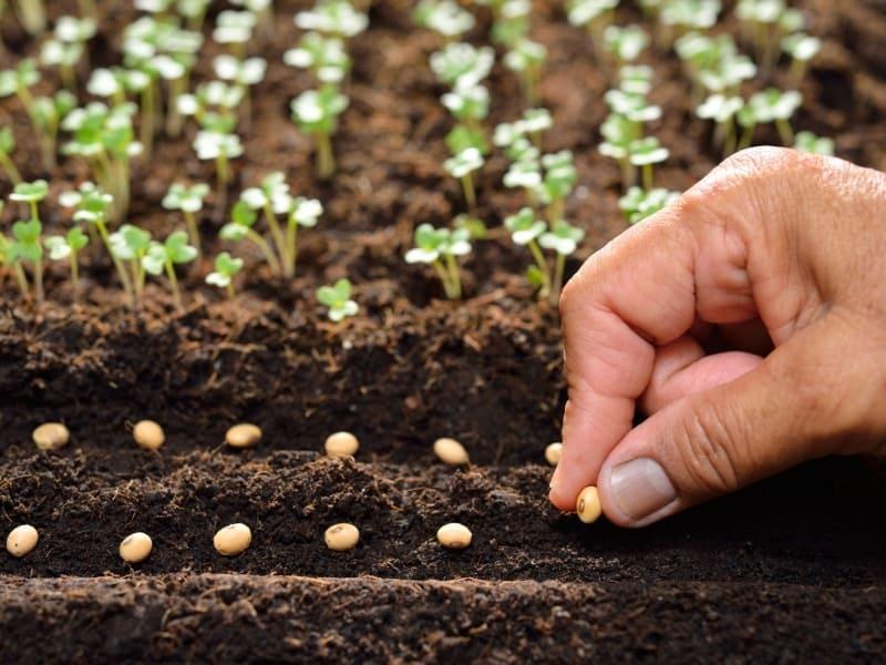 plant carefully