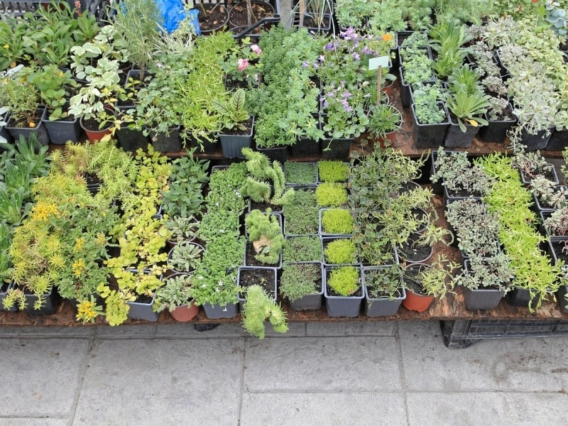 plants you want to grow