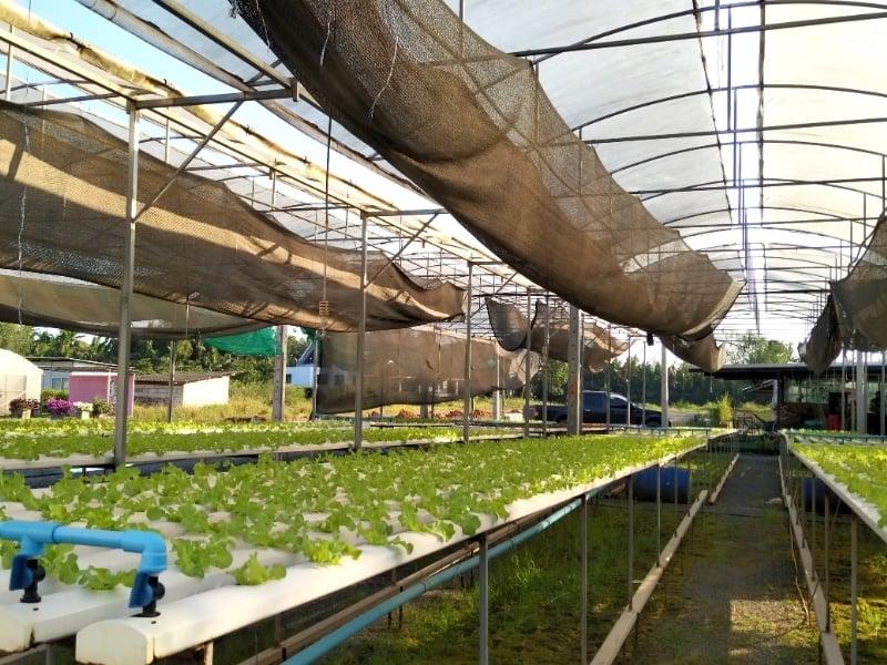 rainwater for aquaponics system